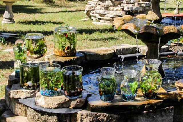 Immersed aquatic terrarium workshop cflas for Florida tropical fish farms