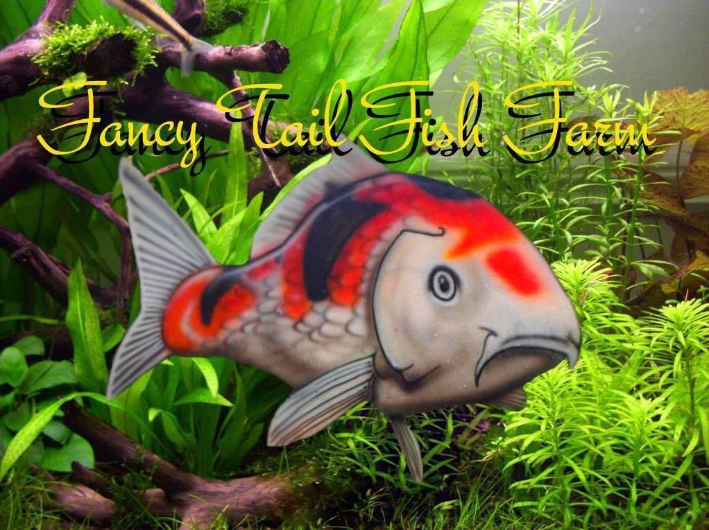 Fall aquatic terrarium workshop grand opening of fancy for Fish farms in florida