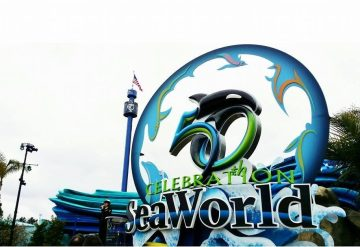 Four (4) of Our Reef Project Team Was Given the Opportunity to Tour the Aquariums at Seaworld Orlando, Both in the Public Areas, and a Rare Glimpse Behind-the-scenes at What…