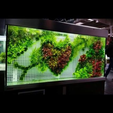 Designing and Maintaining a Planted or Aquascaped Aquarium Can Be a Challenge, Even when Planting on a Horizontal Plane. But Have You Ever Considered Planting Vertically, As a Backdrop? This…
