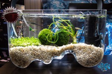 Cobalt Aquatics Unveiled Several New Items at Global Pet Expo, Including Their Line of Unique, Hand-blown Glass Aquariums. the Decoria Line of Tanks Are Individually Hand-made by European Glass Blowers, Creating…