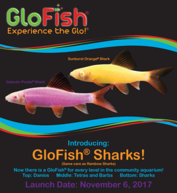 New Rainbow Shark Glofish® Make Their Debut Next Month!