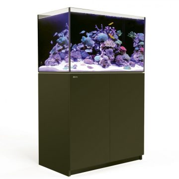 Enter Our Immersed Silent Auction to Win a Red Sea Reefer 250 from the Central Florida Aquarium Society