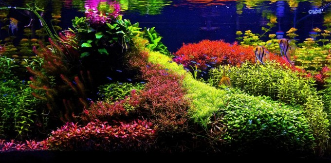 Captivating Whatu0027s Your Aquascape Style?