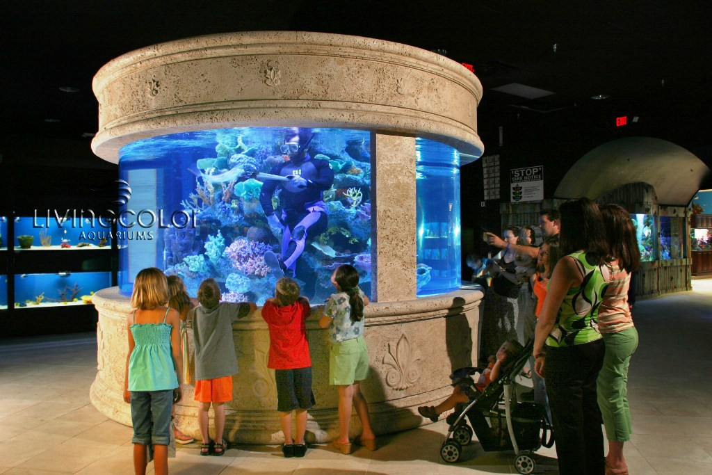 living colour aquariums 1000 aquarium ideas. Black Bedroom Furniture Sets. Home Design Ideas