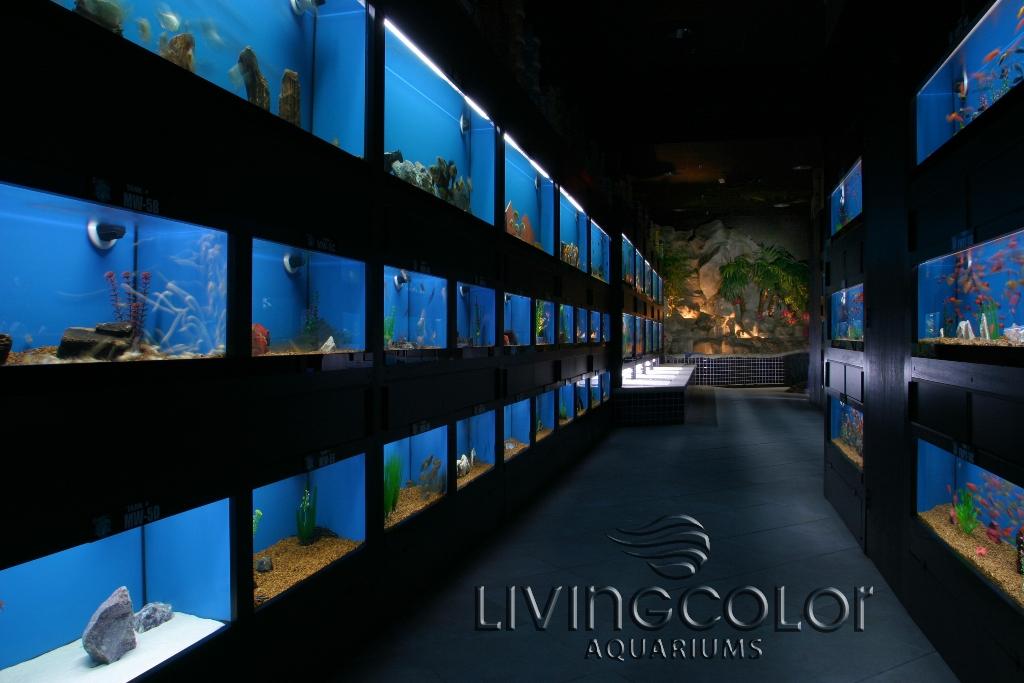Nation 39 s largest aquarium store closes cflas for Aquarium shop