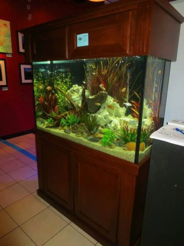 Up for Silent Auction is a Complete 110 Gallon Aquarium As Seen Here, from Our Immersed Aquaculture Art Gallery Exhibit.  our Sponsors, Fish Gallery, Marineland, Tetra, Eheim, Hagen, and Fluval…