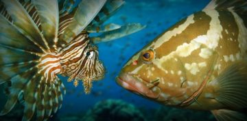 Lionfish May Be Beautiful, but Their Arrival in Caribbean Waters Was Disastrous for Marine Life in the Area. Jim Hart, Co-founder of Lionfish University, Recorded What is Thought to Be…