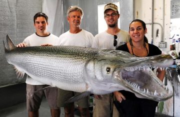 Taxidermy Reproduces Beauty, Brings Record Sized Alligator Gar Back to Life