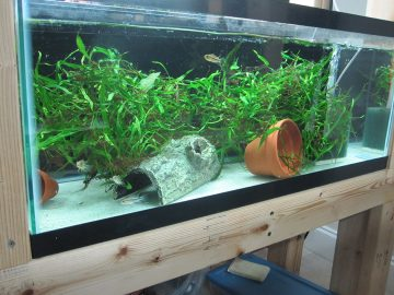 Do You Like the Convenience of a Bare-bottom Aquarium, but Dislike the Look? Maybe Your Fish Become Uneasy Because They Can See Below Them and Feel There May Be A…