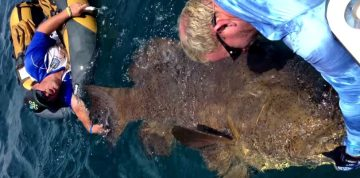 The Guys from Crazy Lure Bait & Tackle Shop in Cape Coral, Florida Are at It Again, This Time Reeling in a 600-pound Goliath Grouper from an Inner Tube!