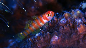 Exploration of Coral Reefs, Underwater Caves, and Their Inhabitants