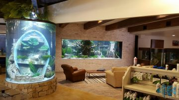 Aquarium Store Opens in the Woodlands Area in Spring, Texas