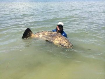 Screaming Drag and a Broken Rod As Kayaker Lands a Massive 552-pound Goliath Grouper