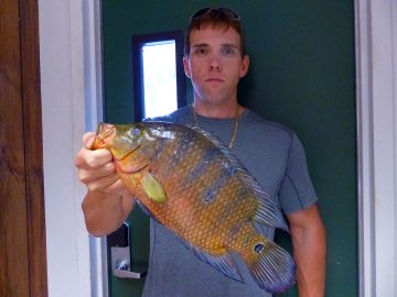 First State Record Mayan Cichlid, a Non-native Fish, Certified by Fwc