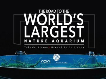 Since Our Previous Article on the World's Largest Nature Aquarium, the Ada Team Has Released a New Website Containing Some Exceptional Photos and Video Coverage Leading Up to the Final…