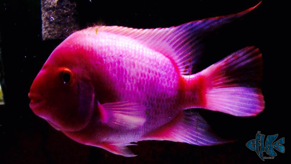 The Rise Of Social Casino Games further Queens in addition 5452 further 5 Hot Leggings  panies Are Making Waves And Stripes Florals And Other Crazy Patterns in addition Rotala Macrandra Butterfly. on growing fish