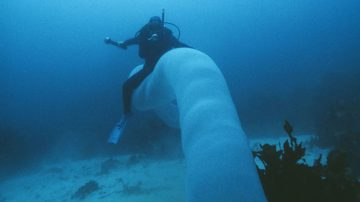 Pyrosomes Are Cylindrical or Conical-shaped Colonies Made Up of Hundreds to Thousands of Zooids – Individualanimals That Are Part of a Colonial Animal. These Jelly-like, Free-floating Marine Filter-feeders – Or…