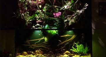 When Technology Meets Aquatic Environments, Something Beautiful Happens. Such is the Case with This Fully Automated paludarium Designed to Simulate an Amazonian Biotope with Realistic Environmental Effects, So Real That You…