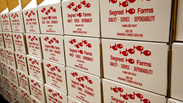 Florida Fish Wholesaler Segrest Farms Purchased For $60m