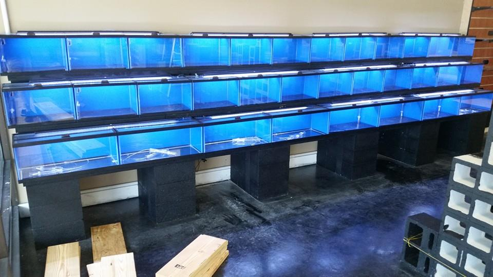 Aquatic Retail From The Ground Up